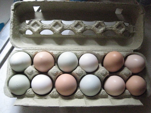 Organic Pasture-Raised Eggs | by wmbraine