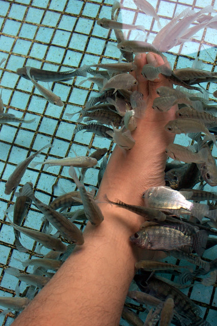 Fish spa manila ocean park this is a first for me a for Fish eating dead skin spa