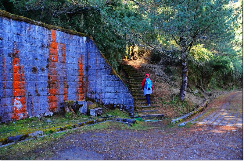 鹿林前山岔路