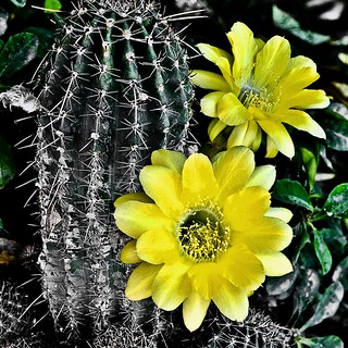 Origin of the Yellow Flower | by .M*A*K. (OFF)