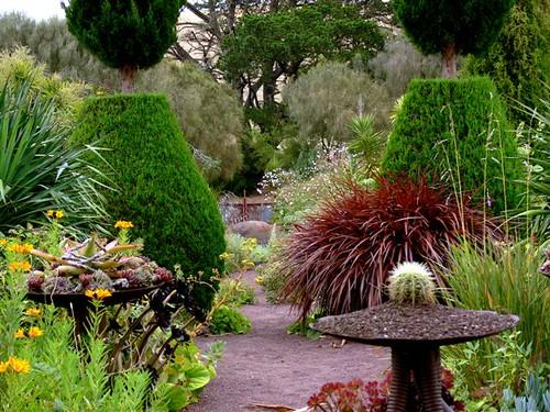 Billy martin 39 s 39 wigandia 39 photo garden by billy martin for Landscape design jobs adelaide