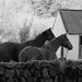 Nire Horses