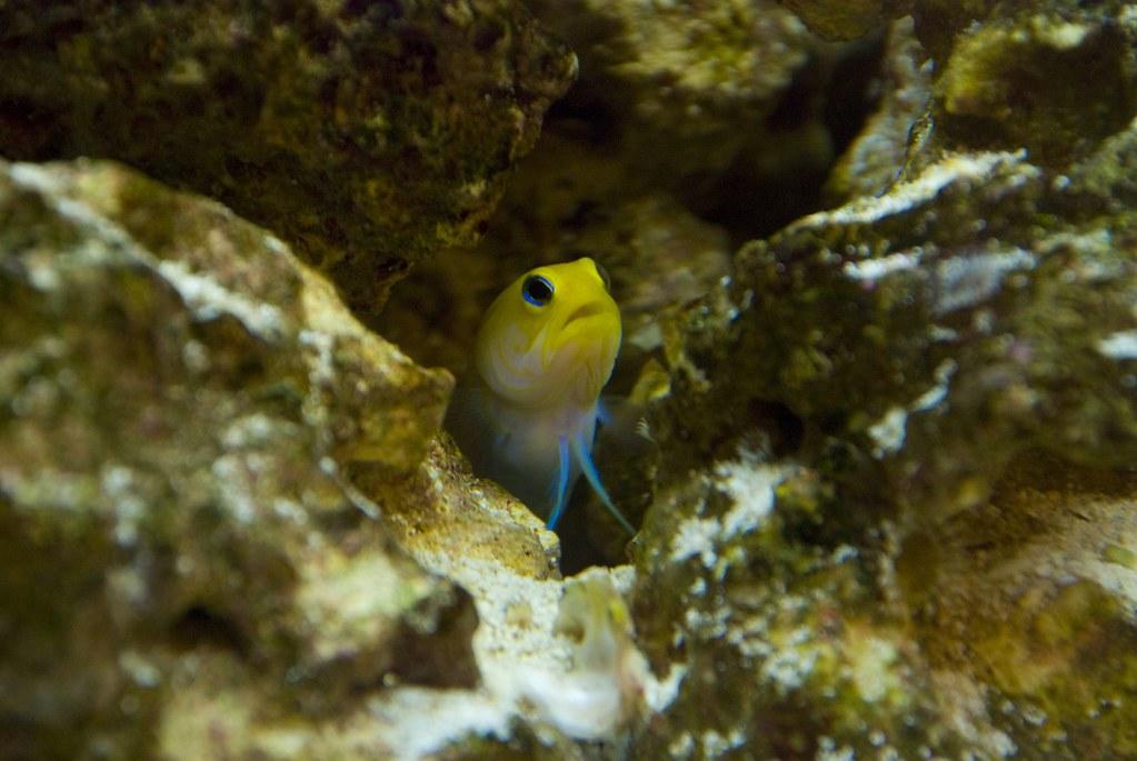 Algae eating fish 0088 alex houston flickr for White algae in fish tank