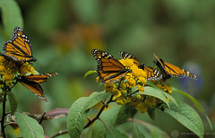 Butterflies | by World Bank Photo Collection