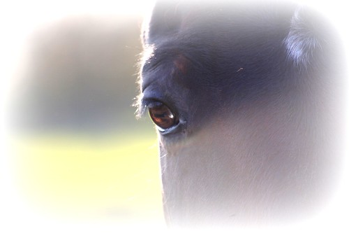 horse's eye | by *kiwikiss