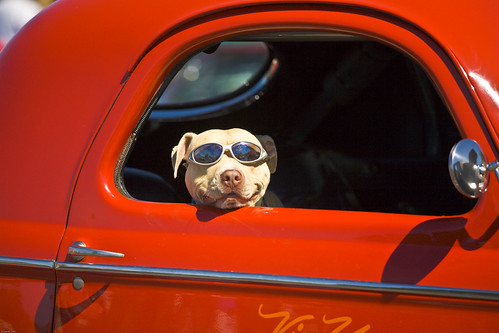 _MG_1658 Dog Wearing Sunglasses | by Agile Mind