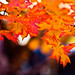 Autumn Leaves, Ridgeway, SC