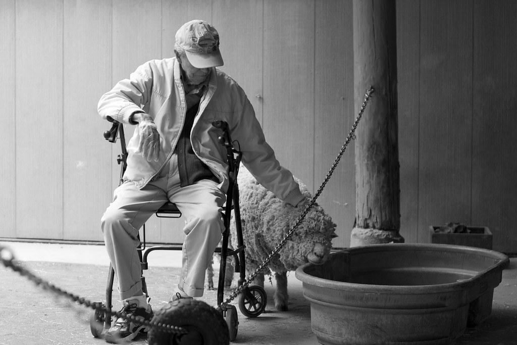 Old Guy Petting Dog