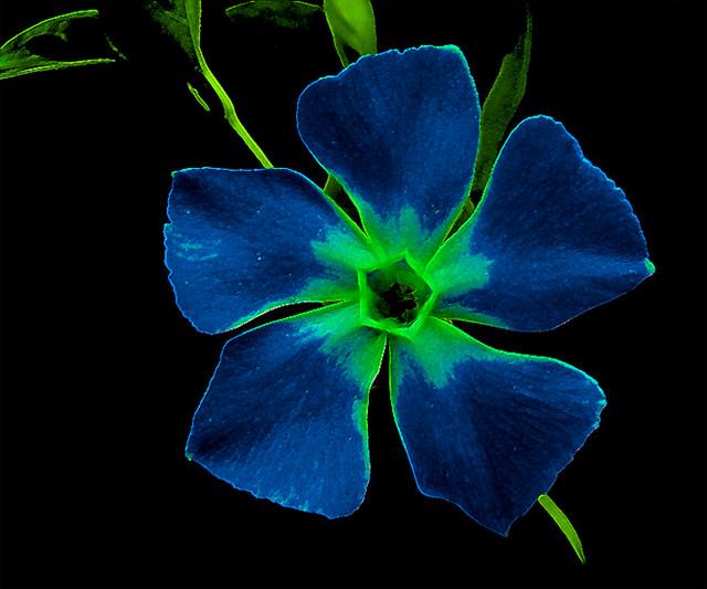 0042 Azul, violetaflor   Ricardo   Flickr