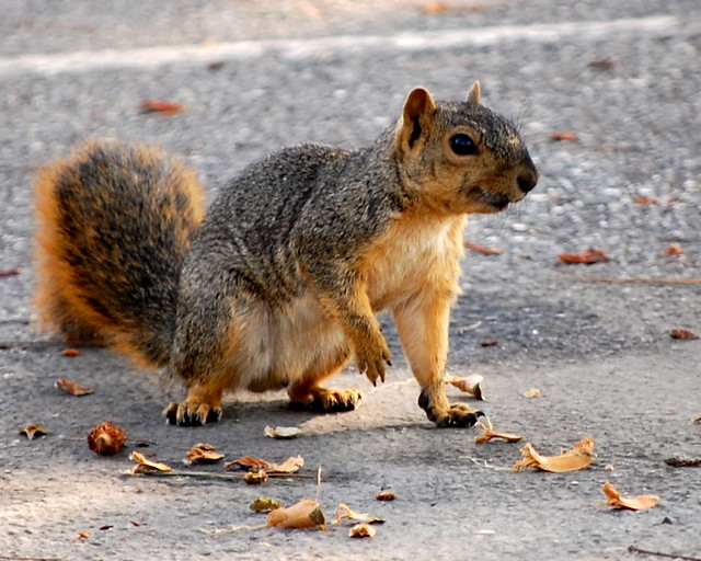 Another of that Rabid Squirrel | At the upper area of ...