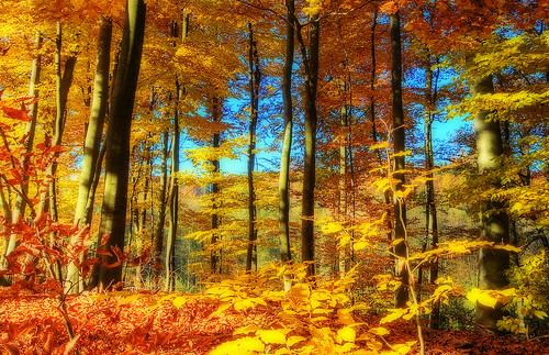 HerbstFeuer | by Wolfgang Staudt