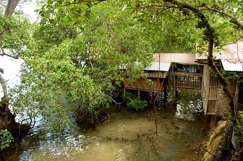 Mangrove House Nena Flickr