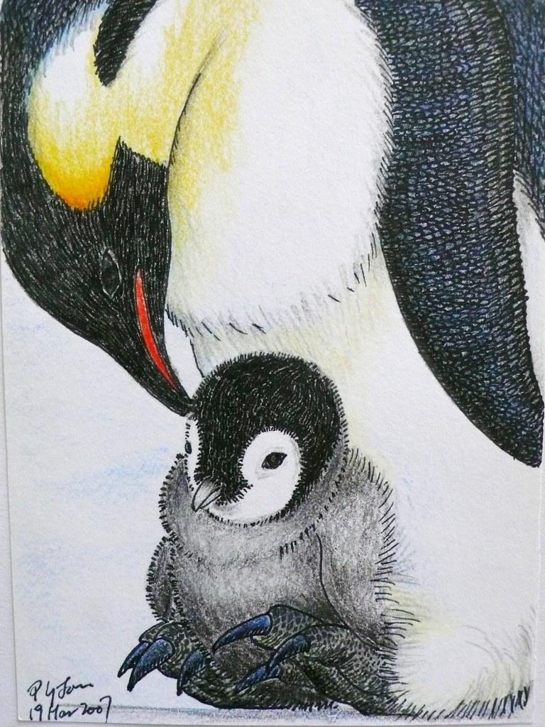Penguin Family Drawing Emperor Penguin Color Pencil