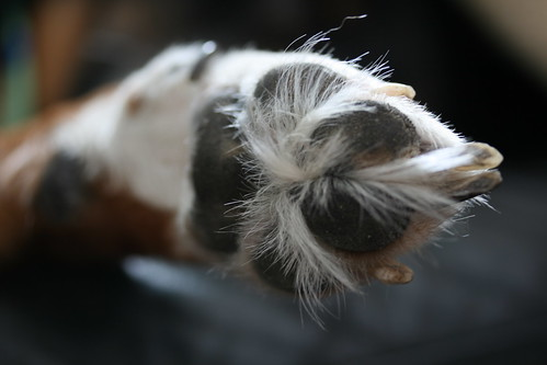 Socky's Hairy Paw | by Birdfreak.com