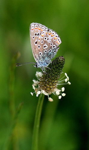 PAPALLONA - MARIPOSA | by beagle34