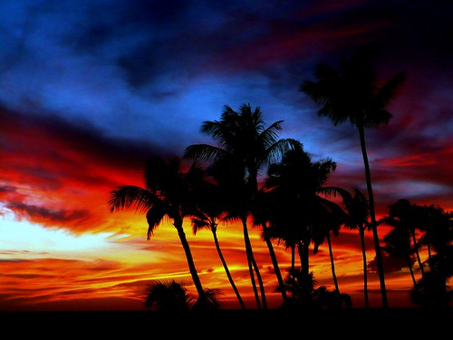 Palm Tree Sunset | by ilovepics11
