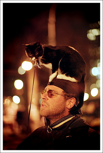 Cat on head | by pyl213