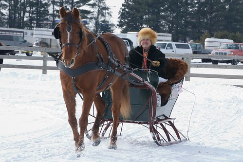 One horse open sleigh! | by pmarkham