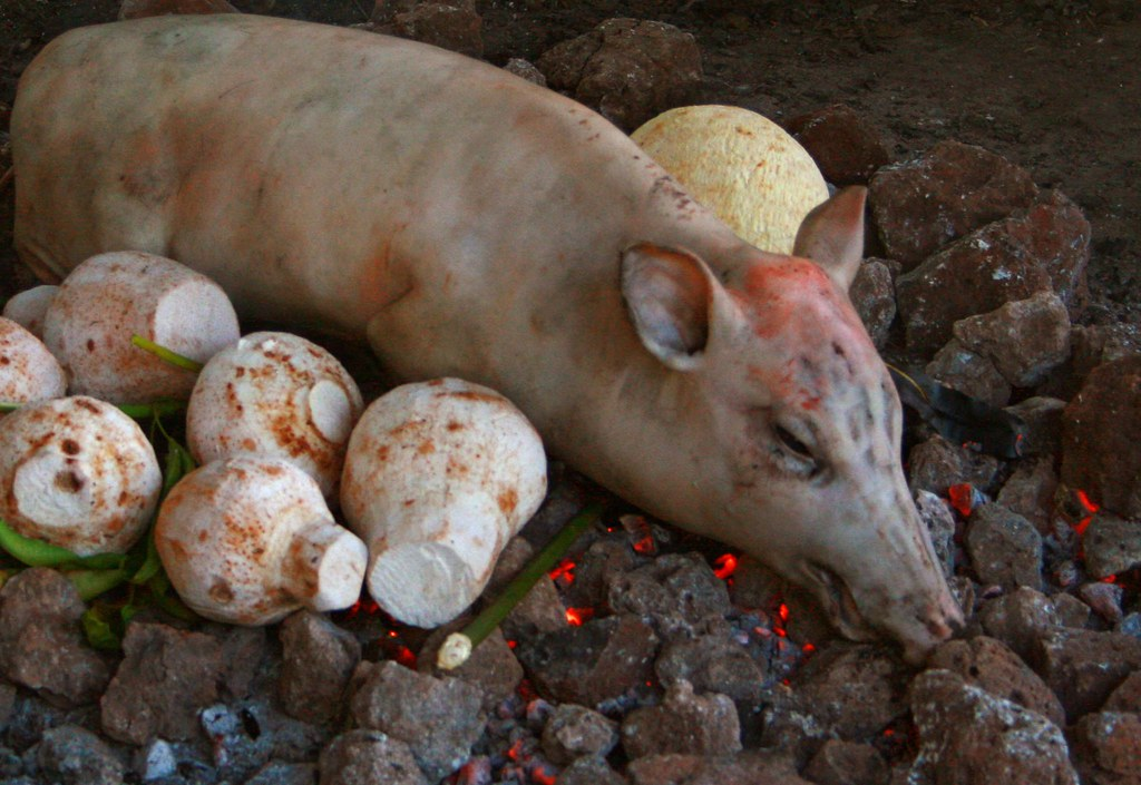 "Pig on the Umu | Pig on the Umu. So the ""Umu"" is the Samoan … 