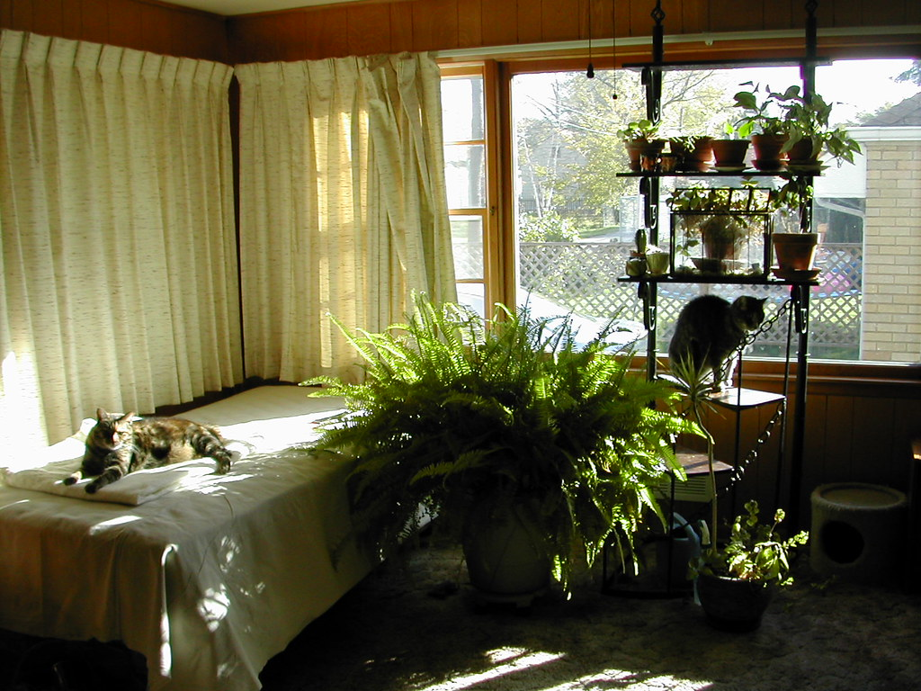 The cats like Jule's new sunroom. | Kali on the bed and ...