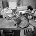 cat shelter #1