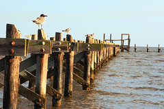 Seagulls and Sunlight | by ` Toshio '