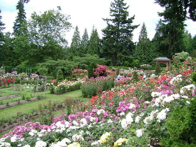 International Rose Test Garden Portland Oregon Flickr