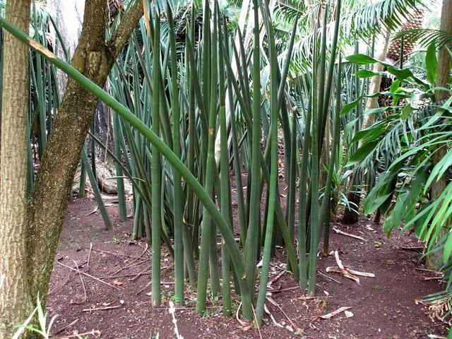 Искусственные растения для интерьера в студии Коллекция