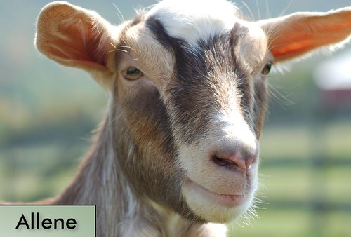 Allene | by Farm Sanctuary
