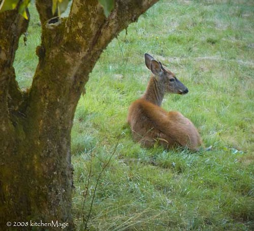 spike under my apple tree | by kitchenmage
