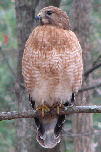Hawk Eye Nature Cam