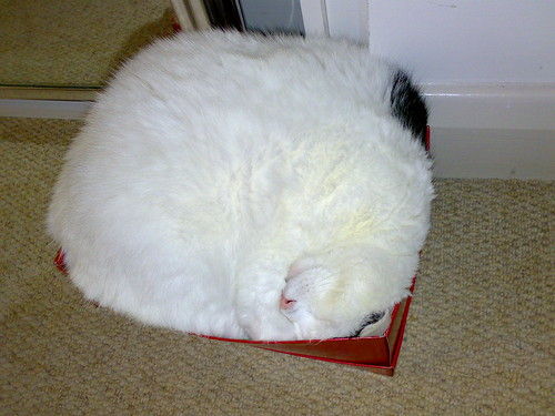 Cats Boxes Video