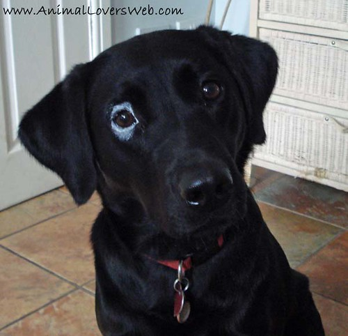how to get rid of dog conjunctivitis