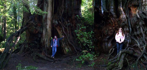 A very large cedar tree! | by brettbigb