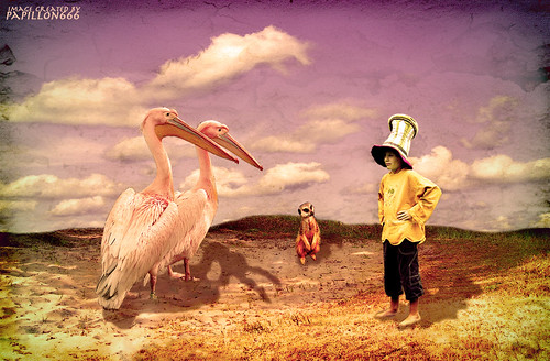 Conversation with the Pelicans in the Dunes.. | by papillon666