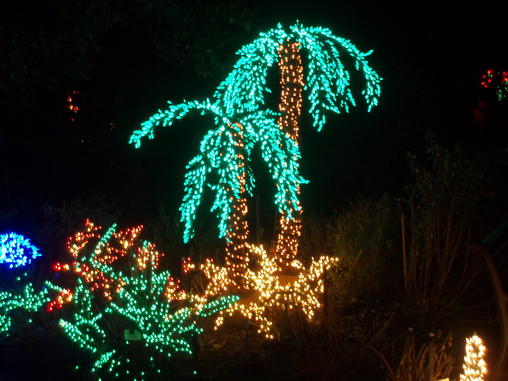 ... Palm Tree Christmas Lights | By Jimmerbond