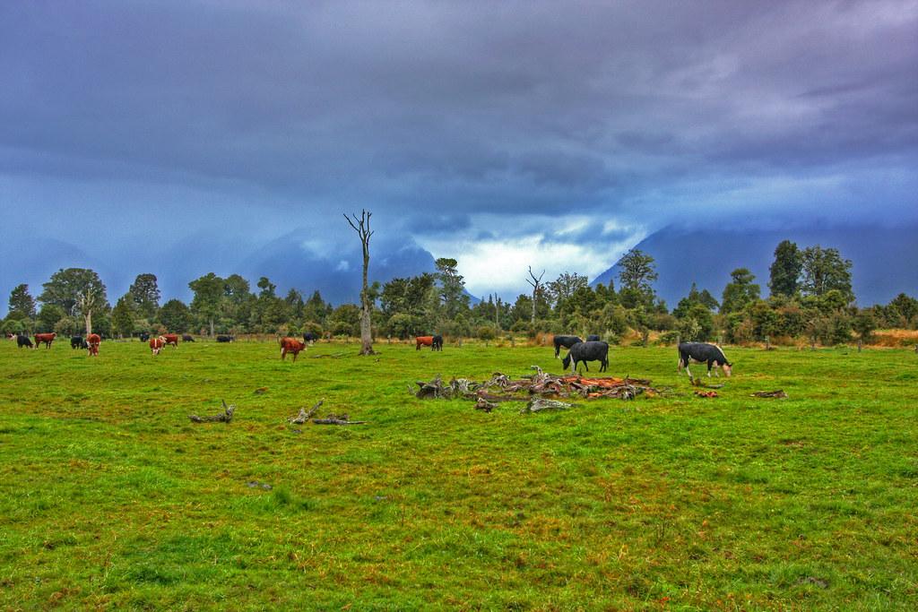 Farm landscape farm in a new zealand landscape against for Landscape jobs nz