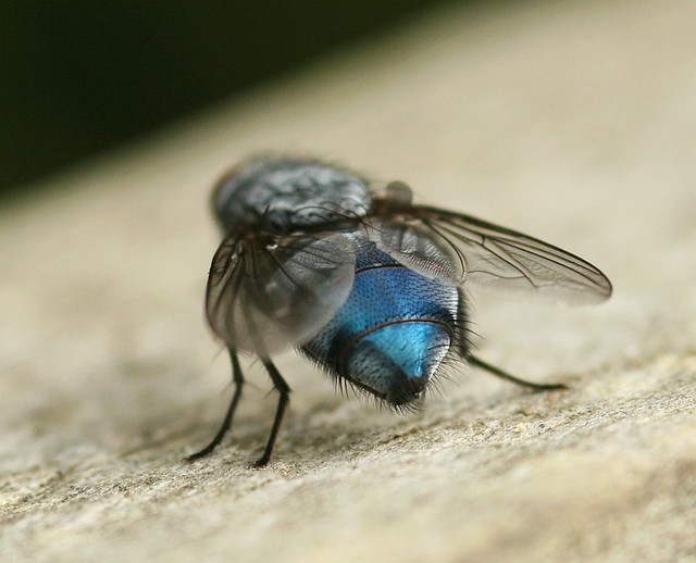 I M Running Around Like A Blue Arsed Fly All A Bit