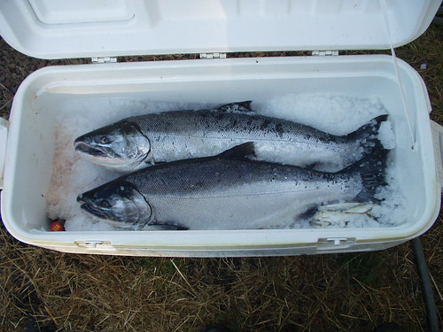coho limit | by red alder ranch