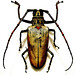 Big Bug III…!!!
