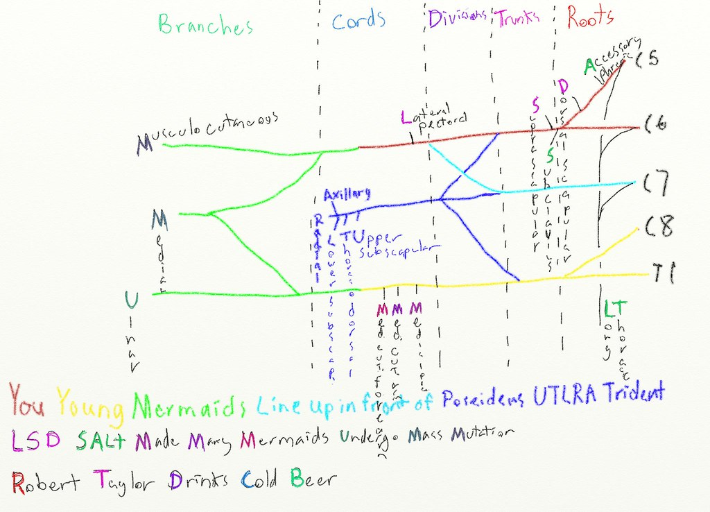 brachial plexus the power of mnemonics i was able to
