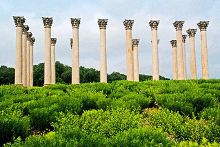 Capitol Columns | by shell game