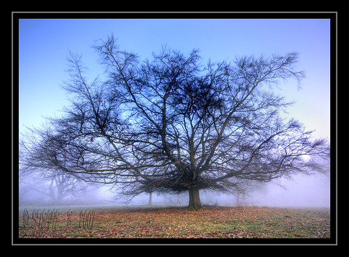 foggy tree | by stev1eb