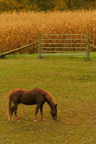 IPhone Wallpaper Horse