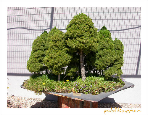 Museo del bonsai jard n japon s alcobendas madrid espa for Bonsai de jardin