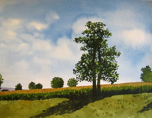 Tree with long shadows | by Cecca W