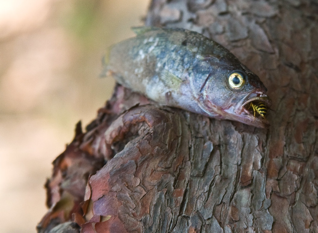 Fish In A Tree Eating A Bee