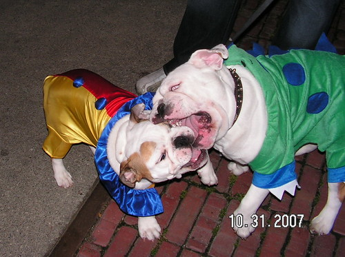 English Bulldog Halloween Party | by sonja71