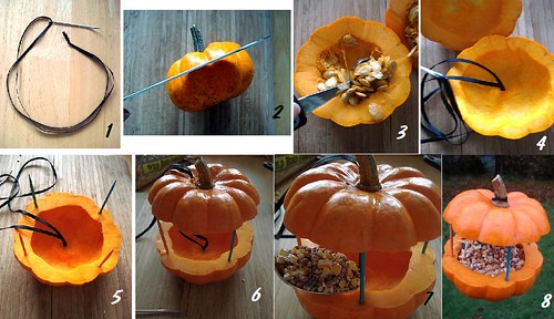 How to recycle a small decorative pumpkin into a bird-feeder | by Sakurako Kitsa