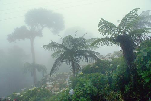 Bosque Nublado Con Hortensias Alepho Flickr